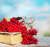 Bunch of red autumn guilder-rose viburnum berries on an old book Stock Images