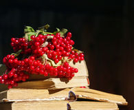 Bunch of red autumn guilder-rose viburnum berries on an old books Stock Photography