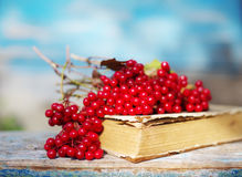 Bunch of red autumn guilder-rose (viburnum) berries on an old book Stock Photo