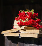 Bunch of red autumn guilder-rose (viburnum) berries on an old books Royalty Free Stock Photos