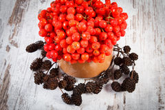 Bunch of red autumn rowan and alder cone on rustic wooden background Royalty Free Stock Photos