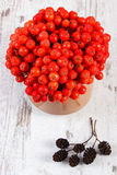 Bunch of red autumn rowan and alder cone on rustic wooden background Stock Image