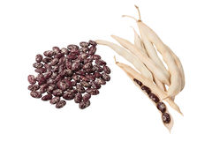 Bunch of red beans and pods Royalty Free Stock Images