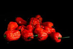 Bunch of Red Bhoot Jolokia Spicy ghost pepper isolated in black background with space for text.  royalty free stock images