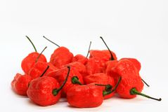 Bunch of Red Bhoot Jolokia Spicy ghost pepper isolated in white background with space for text.  stock photography