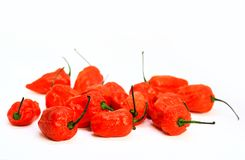 Bunch of Red Bhoot Jolokia Spicy ghost pepper isolated in white background with space for text.  royalty free stock photography