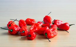 Bunch of Red Bhoot Jolokia Spicy ghost pepper isolated in wooden background with space for text.  royalty free stock images