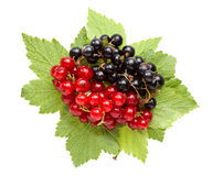 Bunch of red and black currant on leaves Stock Photo