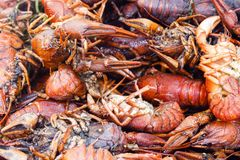 Bunch red boiled crayfish with spices. Background heap of red boiled crayfish with spices Stock Photography