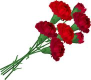 Bunch with red carnations Royalty Free Stock Photos