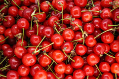 Bunch of red cherries . cherry background. Bunch of ripe juicy red cherries . cherry background Royalty Free Stock Images