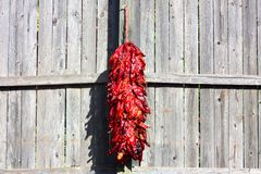 Bunch of red chili peppers on a fence Royalty Free Stock Images
