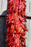 Bunch of red chili peppers on a fence Royalty Free Stock Photo