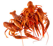 Bunch of red cooked crayfish Stock Images