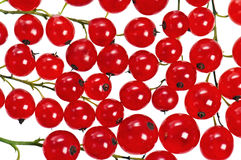 A bunch of red currant Stock Photo