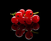 Bunch of red currant berry Stock Image