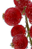 Bunch of red currant in the bubbles under water on a white backg Royalty Free Stock Photography