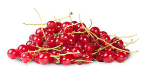 Bunch Of Red Currant Stock Photography
