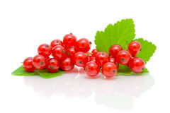 Bunch of red currant on white background Stock Photos