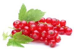 Bunch of red currants Royalty Free Stock Photography
