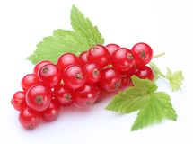 Bunch of red currants. Royalty Free Stock Photo