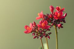 Bunch of red flowers on a branch Stock Photo