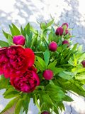 Bunch red flowers royalty free stock photos
