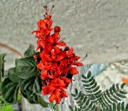 Bunch of red flowers. Wild floral for printing or digital media royalty free stock photography