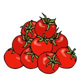 A Bunch of Red Fresh Ripe Cherry Tomatoes. Isolated On a White Background. Realistic and Doodle Style Hand Drawn Sketch royalty free illustration
