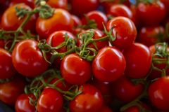 A group of fresh organic tomatoes. A bunch of red fresh tomatoes with green leaves at the market bench Royalty Free Stock Photo
