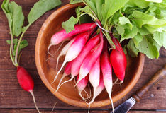 Bunch of a red garden radish Stock Image