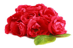 Bunch of red garden roses (flower head) Stock Images
