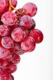 A bunch of red grapes. Stock Photography