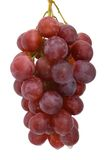 Bunch of red grapes. A bunch of red table grapes against a plain white background Royalty Free Stock Photo