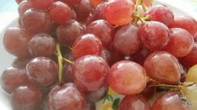 Bunch of red grapes Stock Photos
