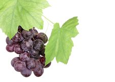 Bunch of red grapes in a grapevine isolated Stock Photos