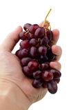 Bunch of red grapes in the hand isolated on white Stock Images