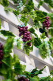 Bunch of red grapes on the vine with green leaves background Royalty Free Stock Images