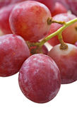 Bunch of red grapes on white Royalty Free Stock Image