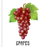 Bunch of red grapes on a white background Royalty Free Stock Image