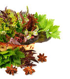 Bunch of  red and green curly lettuce, water-cress, spinach, dil Royalty Free Stock Image