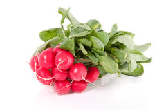 A bunch of red healthy radish Royalty Free Stock Photos