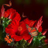 Bunch of red hibiscus Stock Photo
