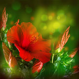 Bunch of red hibiscus flower Stock Photos