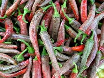 A bunch of red hot chili pepper Stock Photography
