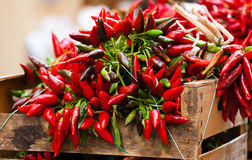 Bunch of red hot chili pepper at market Royalty Free Stock Photo