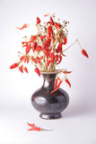 Bunch of red hot chili peppers in vase. A bunch of red hot chili peppers in vase on white background Stock Photo