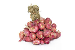 Bunch of red onion Stock Photography