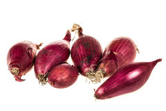 Bunch of red onions Royalty Free Stock Photo