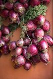Bunch of red onions from Tropea, Stock Photography